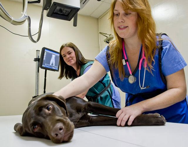 Las malas prácticas veterinarias