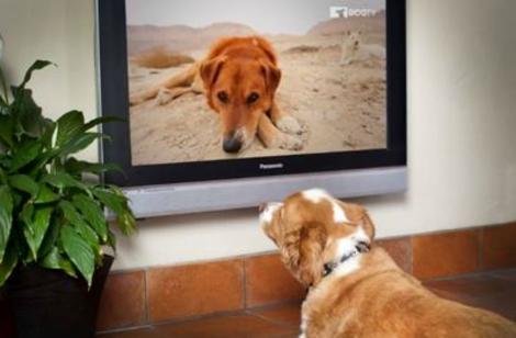 los perros ven la tele