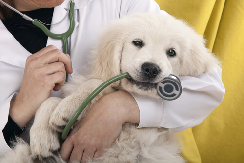 Malas prácticas veterinarias