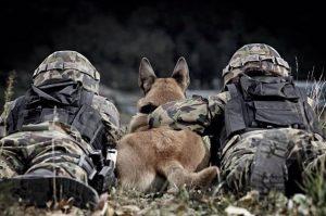mision perro servicio