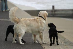 mundo mejor para perros