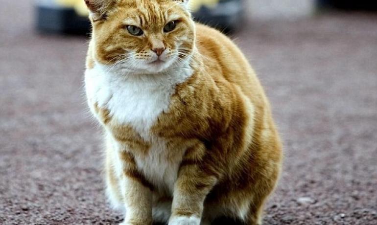 la gata que se convirtió en líder del Aeropuerto de Manchester