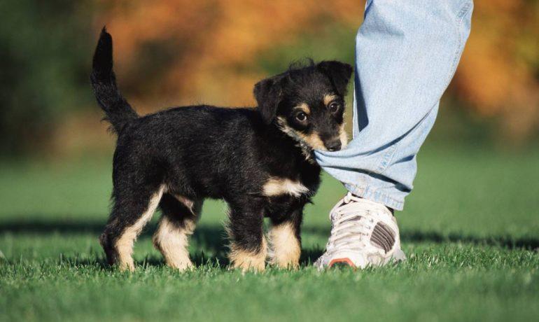 Parásitos intestinales en perros
