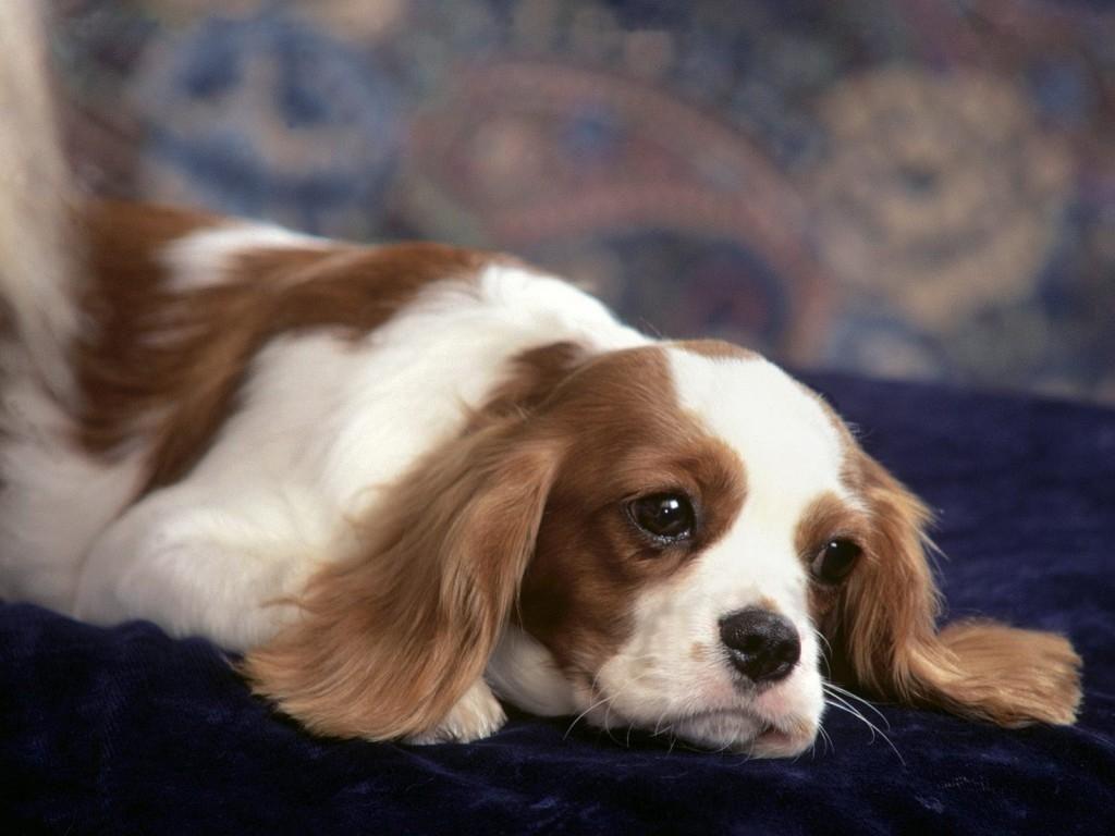 Pasos que debo seguir para prevenir el hiperapego en perros