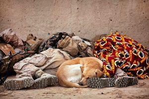 perro echando siesta