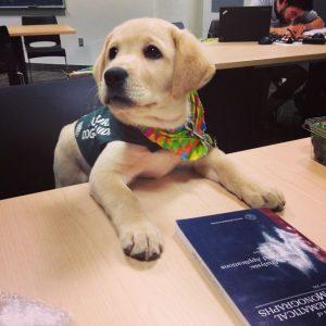 perro guia entrenamiento