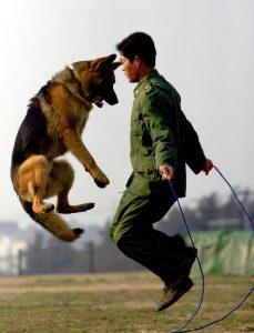 perro policia y entrenador