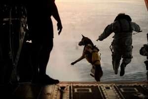 perro salta helicoptero