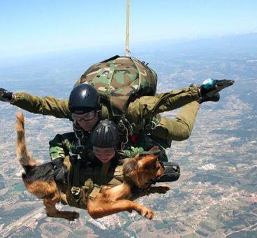 perros de servicio