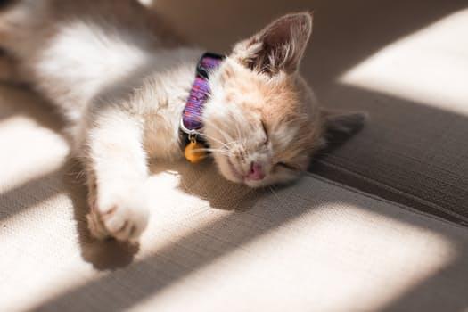 Beneficios cuando mi mascota duerme bien