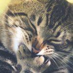 Bolas de pelo en gatos