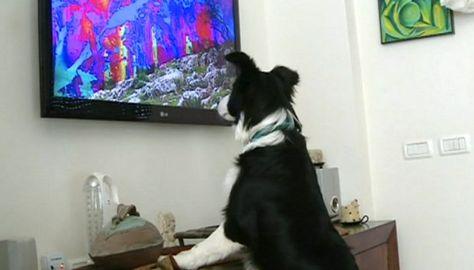 podría la tele despertar interés en un perro