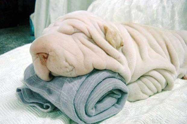 Por qué los perros mestizos viven durante más tiempo