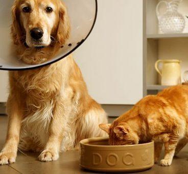Por qué no debes dar comida de perros a un gato