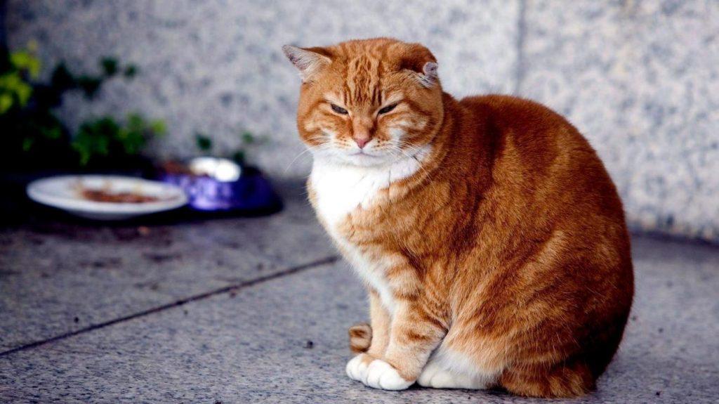 Por qué tienen problemas los gatos para expulsar el pelo