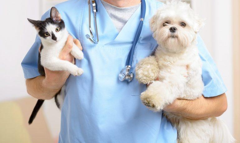 Preguntas básicas que debes hacerle al veterinario