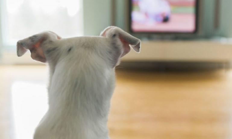 Qué ven los perros en la tele