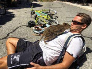 quokka beso ciclista