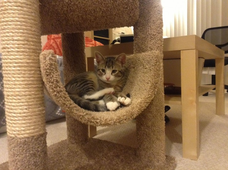 Corregir malas conductas de tu gato