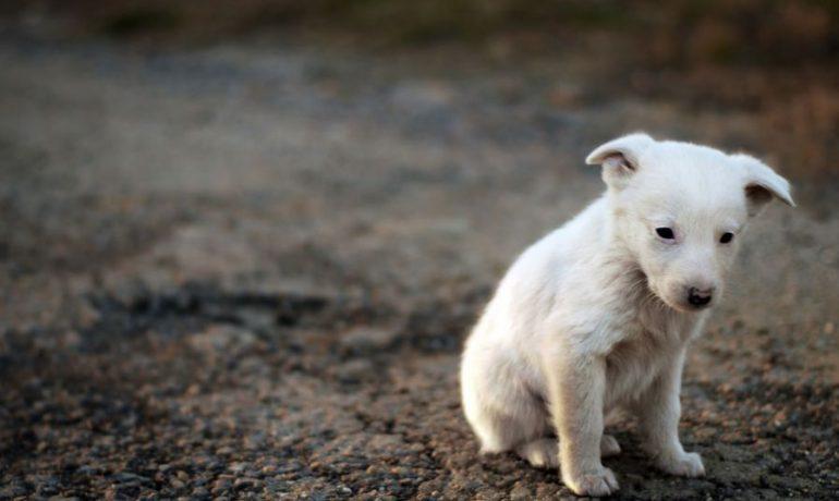 Razones para adoptar a un perro