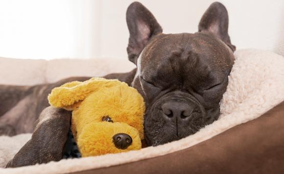 Cómo encontrar el lugar ideal para que nuestra mascota duerma