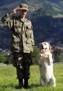 saludo soldado y perro