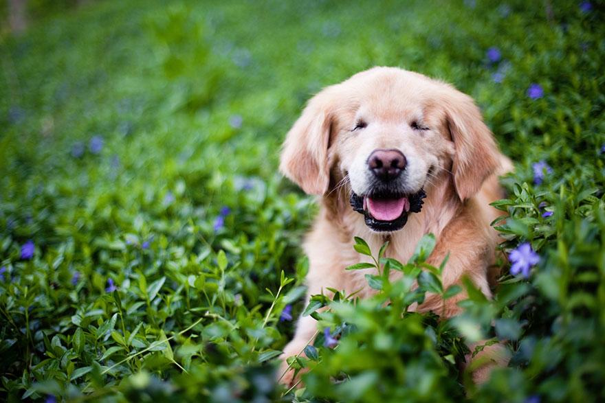 smiley el perro ciego más sonriente