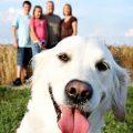 12 perros que consiguieron arruinar una foto