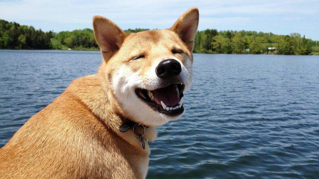 Atento a la salud bucal de tu perro