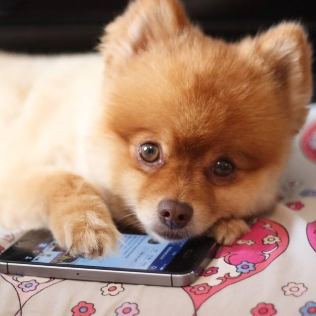 Cómo se contagia la leishmaniasis en perros