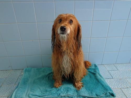 Cada cuánto se baña a un perro