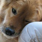 Cistitis en perros