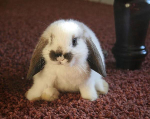 Consejos clave para cuidar a un conejo