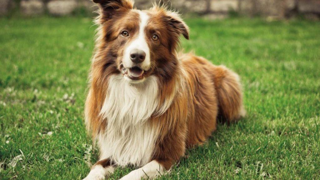 Consejos para evitar la caída de pelo en los perros