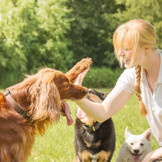 Consejos para optimizar el adiestramiento de tu perro