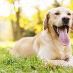 Descubre dónde adoptar a un perro
