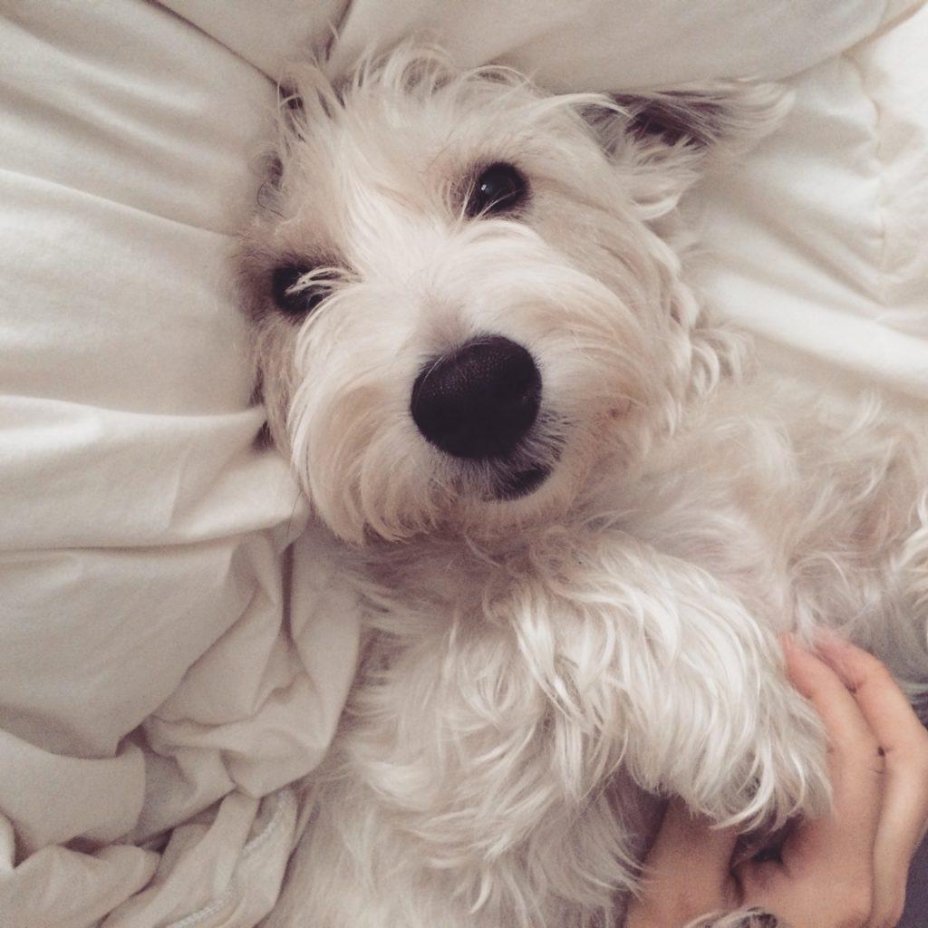 Diagnóstico y tratamiento de la seborrea canina