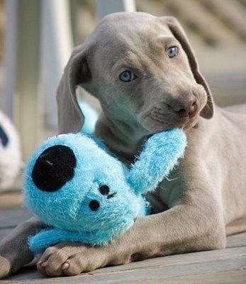 Diagnosticar los hongos en los perros