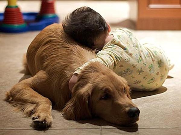 En qué consiste el síndrome de Wobbler en perros