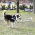 Este perro salva la vida de otros perros detectando veneno en las calles