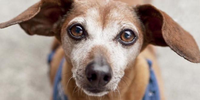 Infección bacteriana en perros
