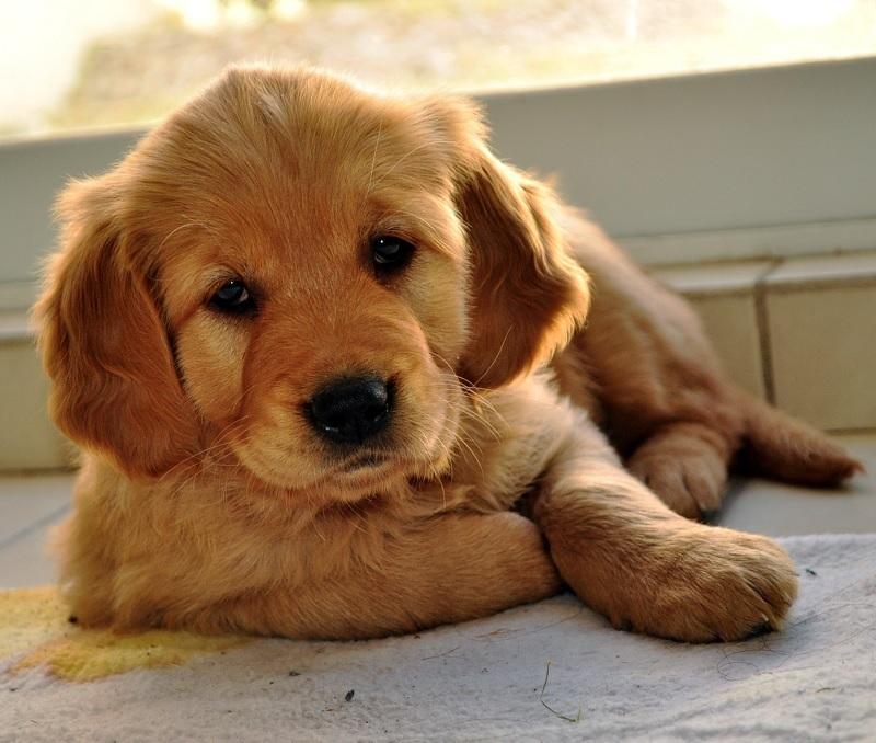 Los 10 motivos más frecuentes de urgencias veterinarias