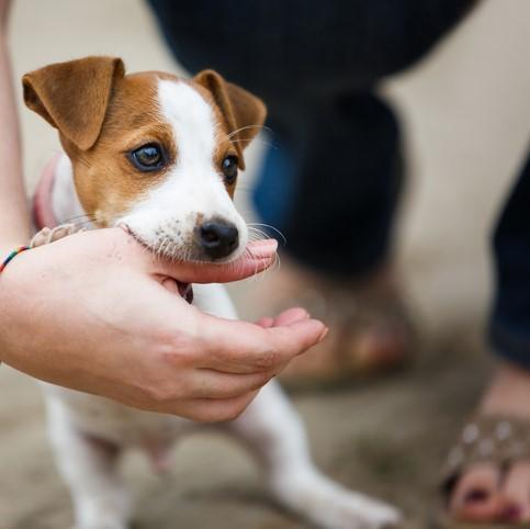 Los hongos de los perros se contagian a las personas