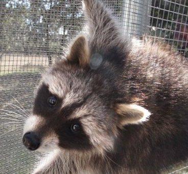 Madrid organiza un curso de cazadores en un Centro de Recuperación de Animales