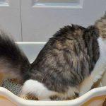 Mi gato no usa el arenero