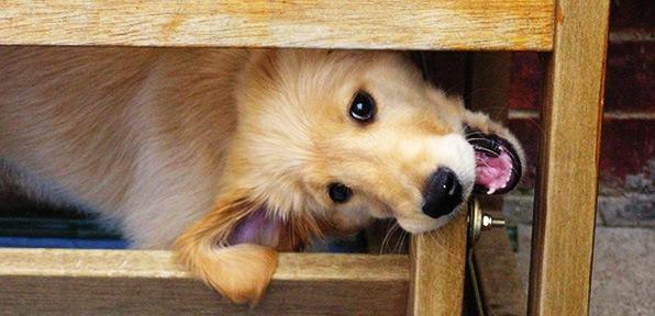 Mi perro muerde los muebles qu puedo hacer consejos y - Muebles para mascotas ...