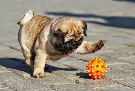 Prevención de la leishmaniasis en perros