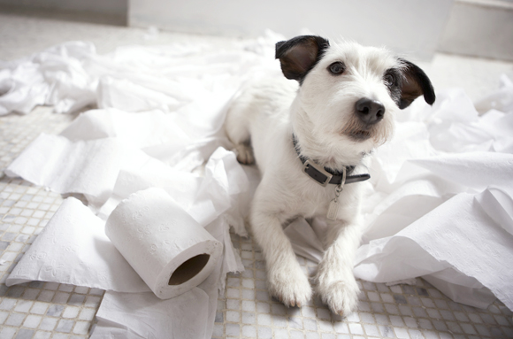 Problemas de conducta al dejar a mi perro solo en casa