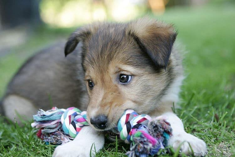 Problemas en el adiestramiento de perros