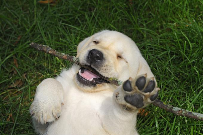Qué es la seborrea en perros